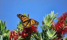 Monarch Butterfly & Bee by JahDog