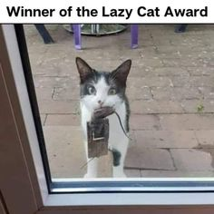 Funny Cats And Dogs, Cats And Kittens, Cute Cats, Funny Animals, Animal Humour, Animal Memes, Lazy Cat, Cat Treats, Cat Memes
