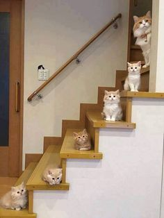 Cute Cats And Kittens Cute Kittens Meowing - Best Pins Live Cute Funny Animals, Funny Animal Pictures, Cute Baby Animals, Animals And Pets, Funny Cats, Funny Horses, Fluffy Animals, Animals Images, Animal Pics