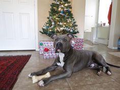 Sabre waits for Santa