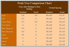 Using Dwarf Fruit Trees in Your Home Orchard Dwarf fruit trees ...