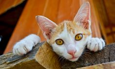 5 Ways My Cats Help Me Stay Sober