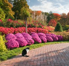 1000 images about front entrance on pinterest front for Annual garden designs