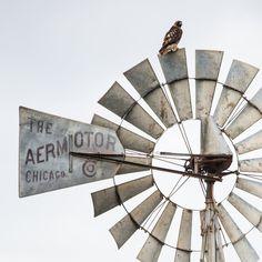 Hawk on Windmill