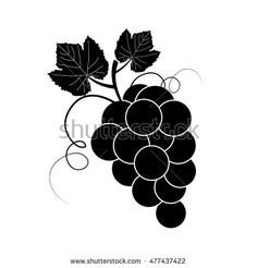 Isolated branch of grape, black on white background