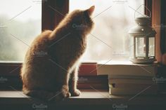 of gloomy days and pale skies Photos he loves watching outside ? by Caterina Neri Photography