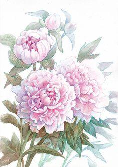 Лето в разгаре, вокруг распускается все больше цветов, одни приходят на смену другим. В прошлый раз мы рисовали бабочек павлиньего глаза на цветках бодяка >> Сегодня в этой же технике будем создавать изображение одних из самых распространенных и, вместе с тем, самых прекрасных цветков — пионов. Варианты формы и окраски их довольно разнообразны. Мы нарисуем розовые.