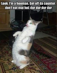 Pushing Off Counter Cat Meme Wwwpicturessocom