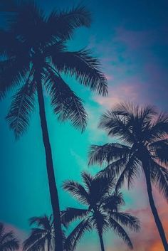 Shop for Gallery Direct 'Retro Sunset Hawaii Palm Trees'. Summer Wallpaper, Tree Wallpaper, Nature Wallpaper, Wallpaper Backgrounds, Palm Trees Beach, Palm Tree Print, Sunsets Hawaii, Palmiers, Vintage Surf