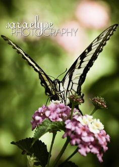Butterfly Wings  Fine Art Photograph 5x7 by saraelysephotography, $12.15