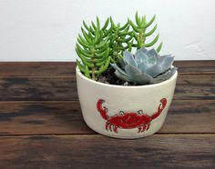 Succulent Planter In Handmade Crab Dish by SourceSucculents