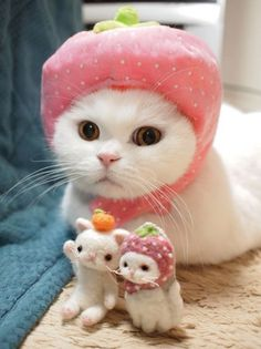 Where your hat and mittens... it is cold out!   I don't want you to catch cold!   Mmmmmmm.