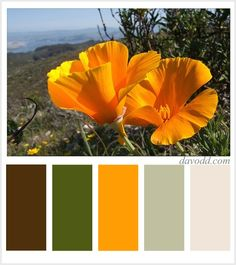 Living room color palette with an eggplant purple --> California Poppies