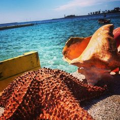 #starfish #conch #Caribbean #tropicalwater #vacation #bucketlist #Bahamas #ParadiseIsland  http://bahamasfinder.com/