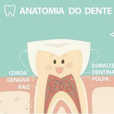 Conheça melhor seus dentes.