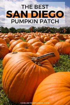 Find out all about the best pumpkin patch in San Diego California in this complete guide to Bates Nut Farm San Diego. This is the perfect way to enjoy fall in San Diego and one of the best things to do in San Diego in fall. Enjoy the fall activities and fall photography spots at one of the best San Diego pumpkin patches.   bates nut farm photography   bates nut farm pumpkin patches   san diego pumpkin patch   pumpkin patches in san diego Vacations In The Us, Fall Vacations, Farm Photography, Autumn Photography, Canned Pumpkin, A Pumpkin, Pumpkin Crafts, Pumpkin Recipes, Pumpkin Patch San Diego
