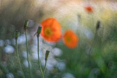 Aires Coral 4.5cm f1.5 – Toby Marshall