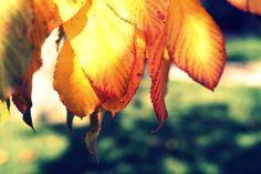 fall leaves fine art photograph wall art by Jessica Nichols