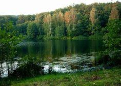 Acuerdo entre Villavicencio y Banco de Bosques para proteger el bosque chaqueño