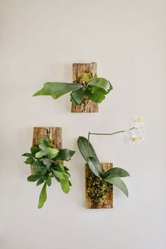 Mid2Mod: More plants for the modern home
