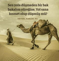 Muhammed Sav, My Dairy, Attitude Quotes, Allah, Camel, Photo And Video, Instagram, Animals, Hindi Quotes