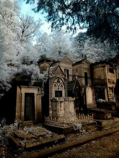 Beautiful old cemetery Cemetery Monuments, Cemetery Statues, Cemetery Headstones, Old Cemeteries, Cemetery Art, Graveyards, Angel Statues, Spooky Places, Haunted Places