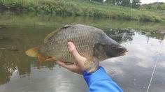 My second carp on fly from Svratka river