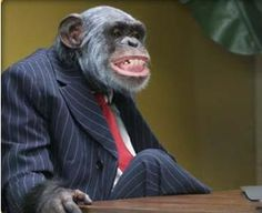 Don't settle for looking like a monkey in your suit. Get a smart, professional suit today! Visit our website to see how we can help - Will You Go, Corporate Outfits, Political Issues, Told You So, How Are You Feeling, Shit Happens, Funny, Animals, Silly Things