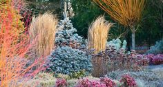 Bressingham Gardens: The Winter Garden was planted specifically with plants of winter interest. On a winter's day and even into spring, the spectacle Garden Soil, Vegetable Garden, Meadow Garden, Gardening Vegetables, Pinterest Foto, Winter Plants, Winter Flowers, Winter Vegetables, Winter Landscape