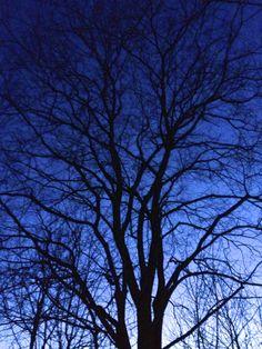 Tree in winterligh