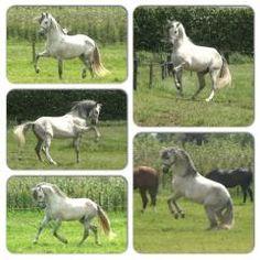 [mooie witte paard]