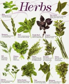 Adding fresh herbs to your recipes make for more tasty and interesting meals. #growingherbs