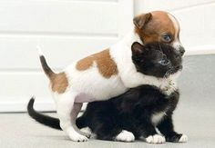 Now listen here you! #rescuedog #dog #itsarescuedoglife