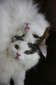 funnywildlife:  #Meow