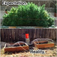 Beginner and novice growers can benefit from reading this. #grow #marijuana #cannabis #weed #outdoors