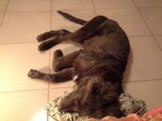Sleeping ;)