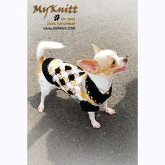 Adorable Chihuahua dog clothes in plaid black, white, and yellow argyle crochet pattern. This unique dog clothes is handmade crocheted and designed by Myknitt Designer Dog Clothes. Made from 100% cotton yarn material very comfortable to be worn in every season. Custom dog clothes are welcome. #chihuahua #chihuahuadogclothes #customdogclothes #dogclothescrochet #cutechihuahua #teacupchihuahua #myknitt