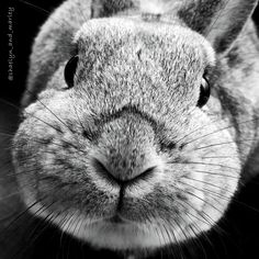 My cute rabbit Marley in black and white.
