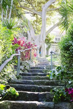 Wendys Secret Garden