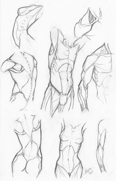 Some sketches of the trunk, female and male.