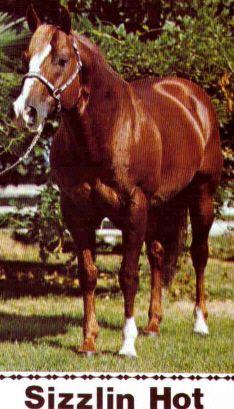 sizzlin hot quarter horse