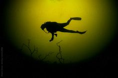 Scuba Diver and Tree in Silhouette by ShaneGross | Stocksy United