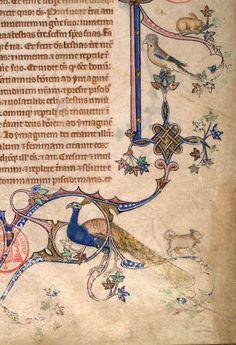 illumination Medieval Books, Medieval Manuscript, Medieval Art, Illuminated Letters, Illuminated Manuscript, Renaissance, Doodles, Book Of Hours, Letter Art
