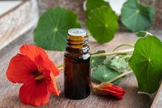 Doreen Virtue, Health Advice, Hot Sauce Bottles, Homemade, Plants, Food, Medicine, Alcohol, Home Made