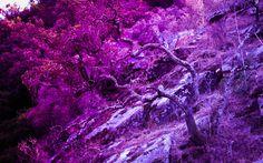 nature in a colourfull way  by: Catarina Velho