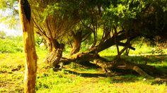 el bosque cerca al rio