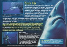 Name: Blue Shark Category: Monsters of the Deep Card Number: 95 Front: Blue Shark Monsters of the Deep card 95 front Back: Blue Shark Monsters of the Deep card 95 back Trading Card: Marine Archaeology, Biology Facts, Types Of Sharks, Blue Shark, Underwater Creatures, Wild Creatures, Animal Facts, Shark Week, Zoology