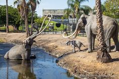 I often forget about LA's unique history when I drive through the massive skyscrapers that make up this concrete jungle, but at one point in time massive creatures walked this land and even managed to get caught and preserved in the La Brea Tar Pits. This spot has a lot of cool things to see, most …