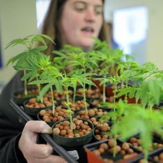 Marijuana Legalization May Have Caught a Lucky Break Thanks to a Serious Crisis