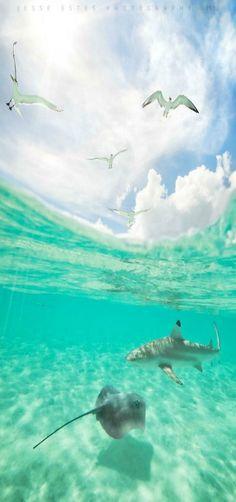 Bora Bora - French Polynesia by Jessy Estes